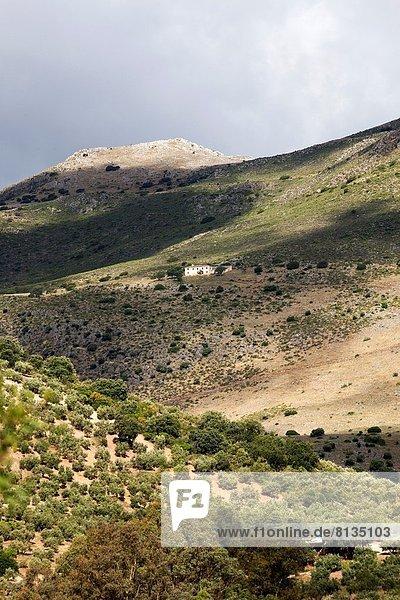 Europa Berg Landschaft Olive Andalusien Spanien
