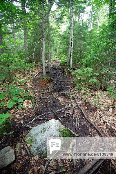Mt Tecumseh Trail during the summer months in the Waterville Valley  New Hampshire USA.