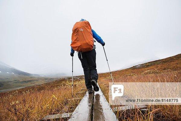 Female hiker walks along wooden planks in Tjäktjavagge on Kungsleden trail  Lappland  Sweden.
