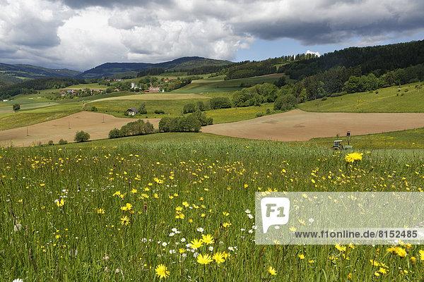 Blume Landschaft Wiese gepflegt
