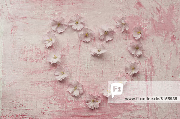 Herzform mit rosa Kirschblüte  Nahaufnahme