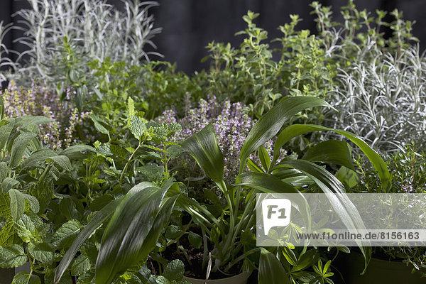 Varieties of herbs  close up