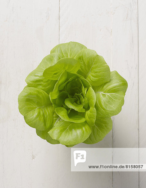 Butterhead lettuce on white background  close up