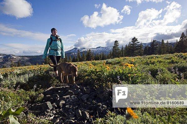 nahe  Frau  Depression  Hund  See  Landschaftlich schön  landschaftlich reizvoll  Hintergrund  Feld  wandern  Wildblume  Kalifornien  Kristall  Süden