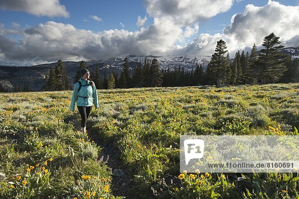 nahe  Frau  Depression  See  Landschaftlich schön  landschaftlich reizvoll  Hintergrund  Feld  wandern  Wildblume  Kalifornien  Kristall  Süden