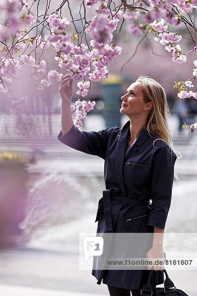 Frau  sehen  Baum  Kirsche  Blüte