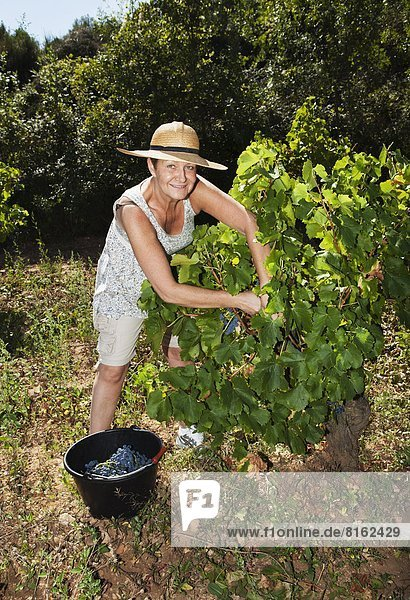 Frau  lächeln  Weintraube  reifer Erwachsene  reife Erwachsene  rot  aufheben Frau ,lächeln ,Weintraube ,reifer Erwachsene, reife Erwachsene ,rot ,aufheben