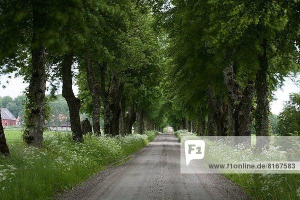 Treelined rural road