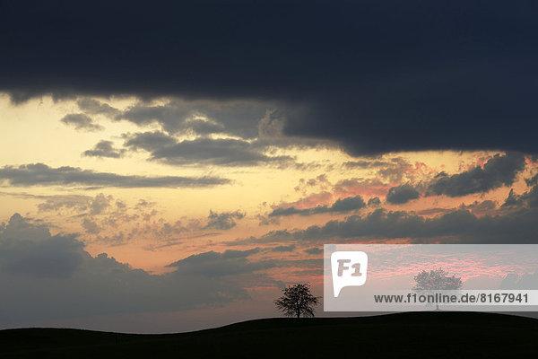 Bäume als Silhouetten vor Himmel voller Gewitterwolken