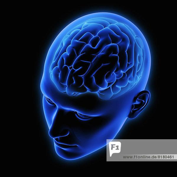 Menschliches Gehirn in blauem durchsichtigem Kopf