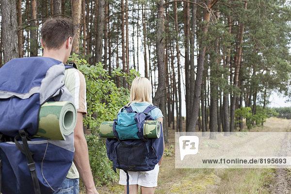 gehen  folgen  Wald  Rückansicht  Ansicht  jung  Backpacker