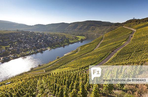 Deutschland  Rheinland-Pfalz  Blick auf die Weinberge von Punderich