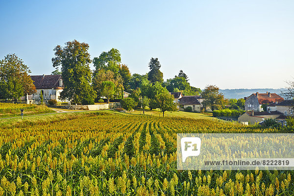 Kornfeld frontal Dorf