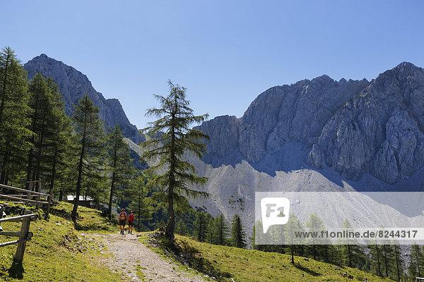 Hochstuhl Group  Matschacher Alm mountain pasture  Baerental or Bear Valley