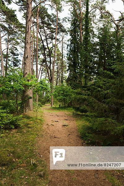 gehen  Weg  Wald