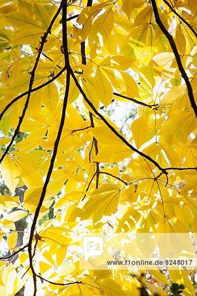 niedrig Baum Laub Ansicht Flachwinkelansicht Winkel