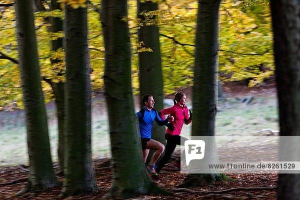 rennen  Wald  Herbst