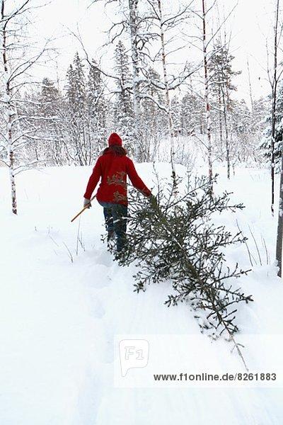 Rückansicht  Frau  Winter  tragen  Baum  Kiefer  Pinus sylvestris  Kiefern  Föhren  Pinie