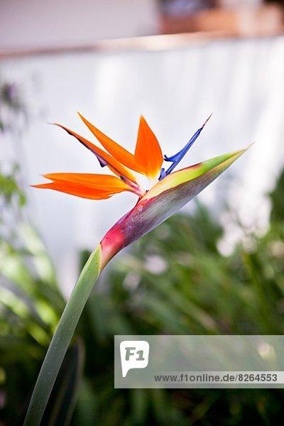 Blume  Close-up  close-ups  close up  close ups  Vogel  Paradies