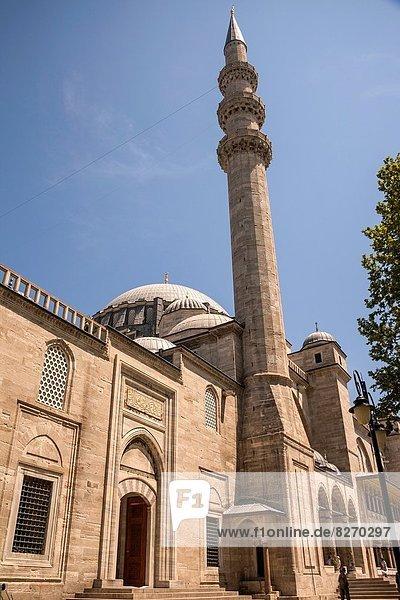 Truthuhn  Istanbul  Türkei