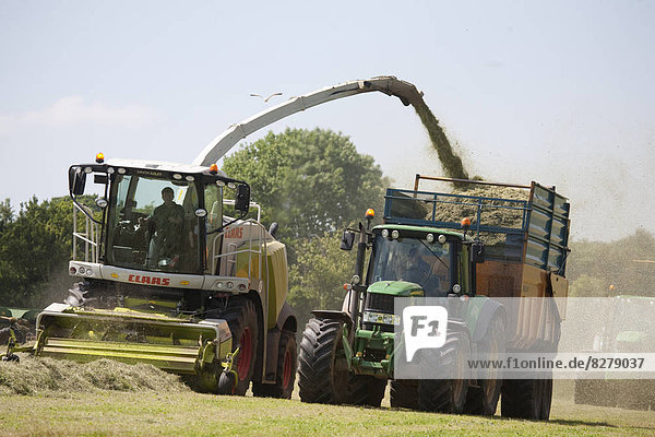 Forage harvester  grass cutting  Silage making