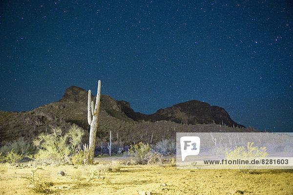 Sternennacht über Kaktus gefüllter Wüste in Tucson  Arizona  USA Sternennacht über Kaktus gefüllter Wüste in Tucson, Arizona, USA