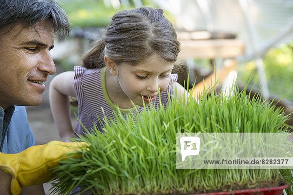 Auf der Farm. Eine Werkbank im Gewächshaus hält Tabletts mit frischen Grünkräutern und Pflanzen. Ein Mann und ein junges Mädchen beugen sich vor  um den frischen Duft der Pflanzen einzuatmen.