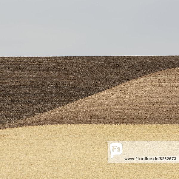 Weizenfelder in Washington. Eine reife Ernte und hügelige Landschaft.