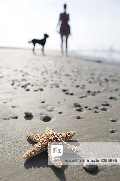 Deutschland  Niedersachsen  Ostfriesland  Langeoog  Seestern und Silhouette einer Frau und ihres Hundes am Strand