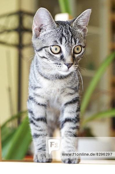 Kitten looking around