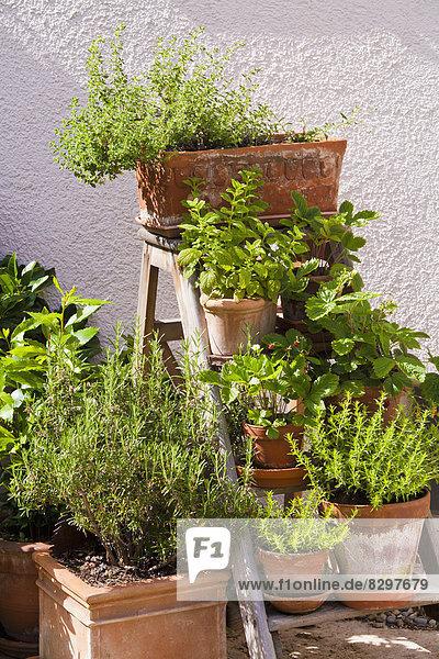 Germany  Stuttgart  Potted herbs in garden