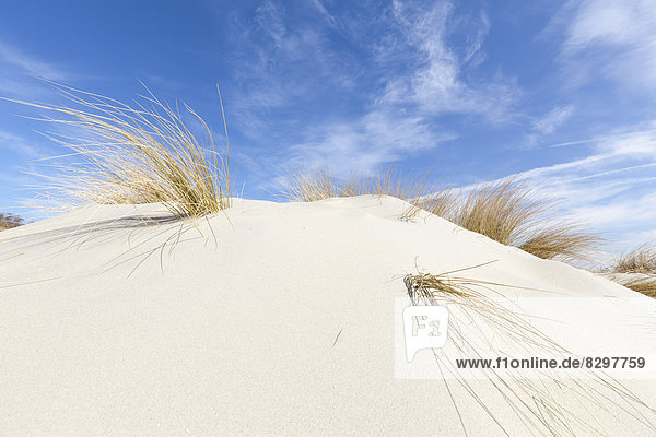 Germany  Lower Saxony  East Frisia  Borkum  dune and marram grass