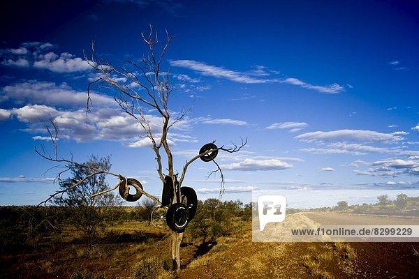 Baum  hängen  Fernverkehrsstraße  Reifen  Autoreifen  Australien  Straßenrand