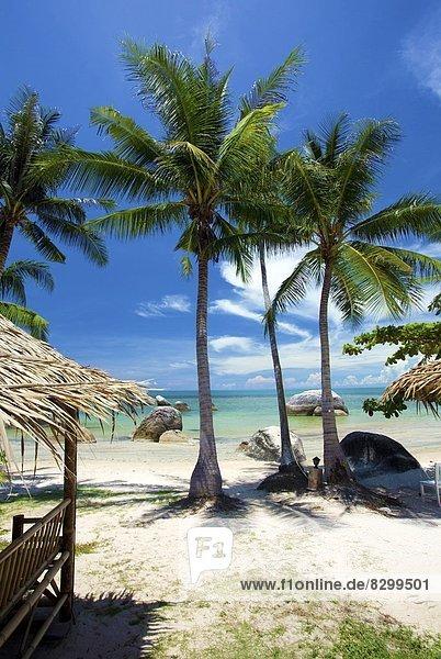 Südostasien  Asien  Koh Samui  Thailand