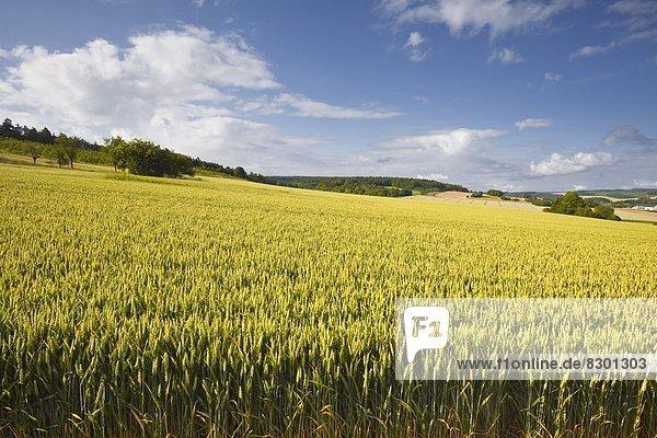 Frankreich  Europa  Feld  Weizen  Zimmer  Champagner