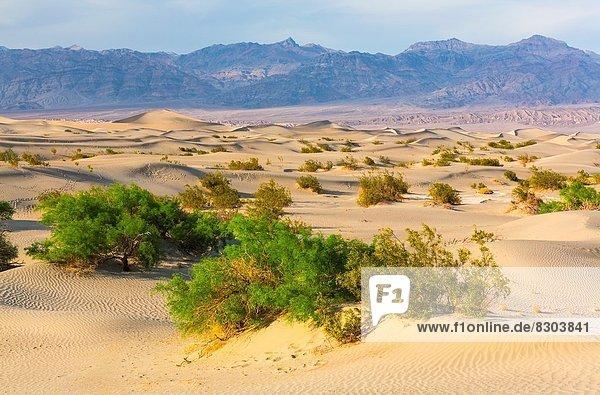 Vereinigte Staaten von Amerika  USA  Amerika  Death Valley Nationalpark  Kalifornien
