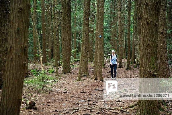 Berg  folgen  wandern  Catskill Mountains