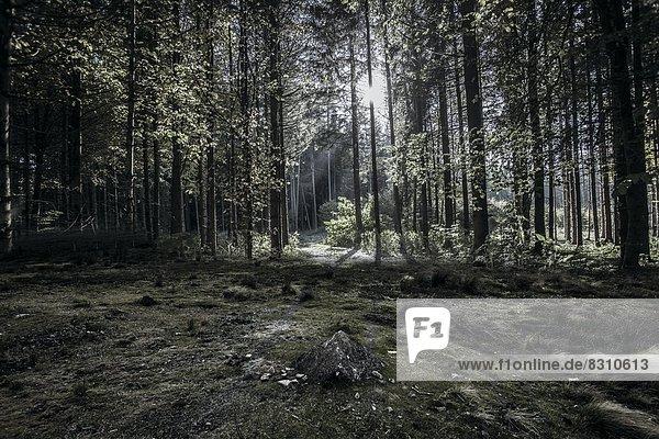 Wald  Bayern  Deutschland  Europa