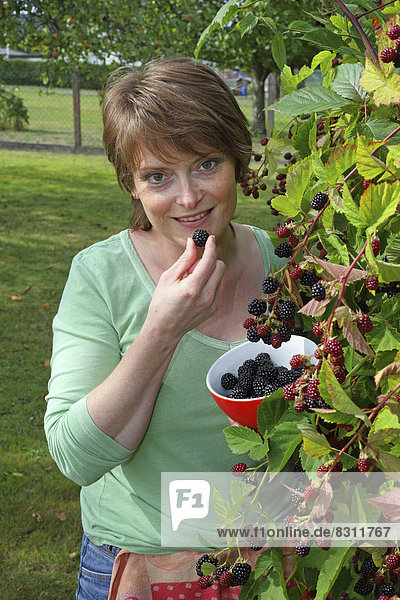 Woman harvesting blackberries in a garden and holding them in a bowl