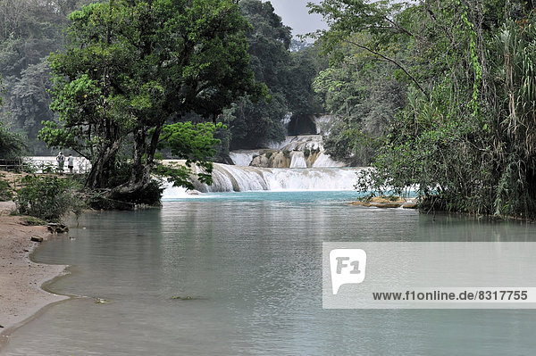 Cataratas de Agua Azul  Wasserfälle des blauen Wassers
