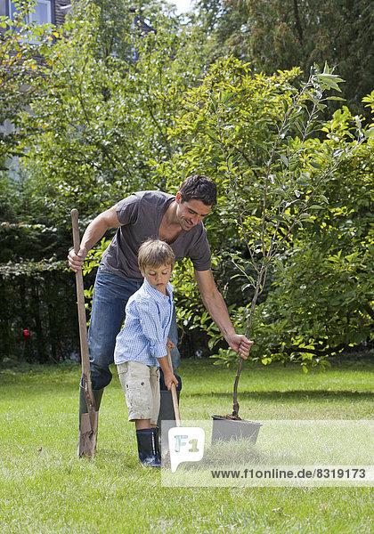 Vater und Sohn pflanzen einen Baum im Garten