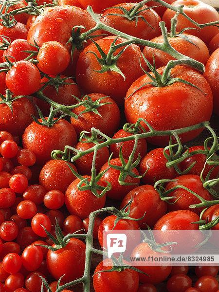 Verschiedene Tomaten  Fleischtomaten  Kirschtomaten  Eiertomaten und Cocktailtomaten