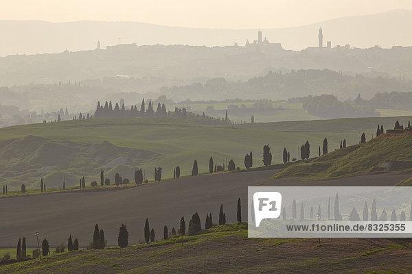 Zypressengesäumte Wege und gestaffelte Hügel  in der Ferne die Türme von Siena