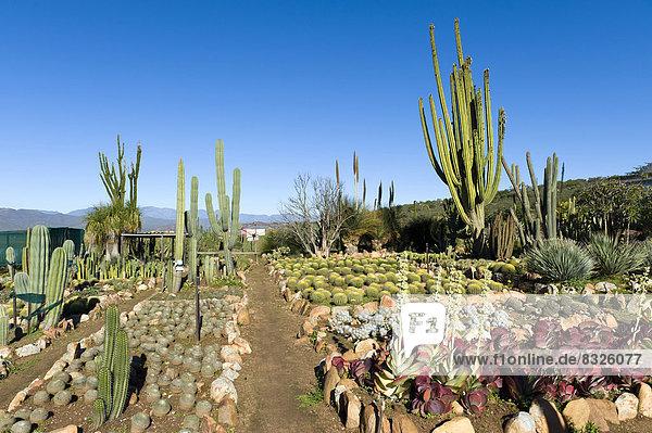 Cactus nursery