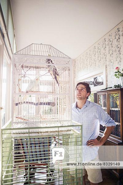 stehend  Portrait  Mann  sehen  Vogel  jung  Papagei