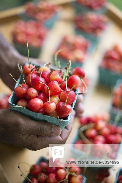 Bio-Obst  ausgestellt an einem Bauernstand. Kirschen in Körbchen.