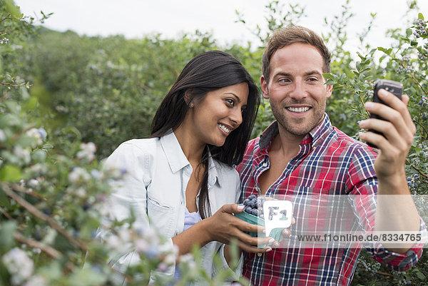 Heidelbeerpflanzen tragen Früchte. Zwei Personen zwischen den Büschen  die sich mit einem Smartphone ein Selfy nehmen.