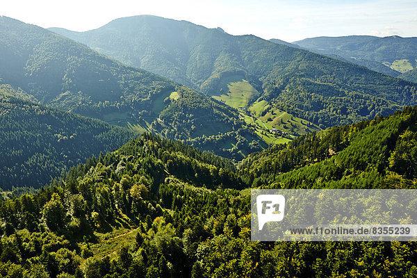 Bewaldete Berghänge im Hochschwarzwald mit Belchen im Hintergrund  Münstertal  Baden-Württemberg  Deutschland Bewaldete Berghänge im Hochschwarzwald mit Belchen im Hintergrund, Münstertal, Baden-Württemberg, Deutschland