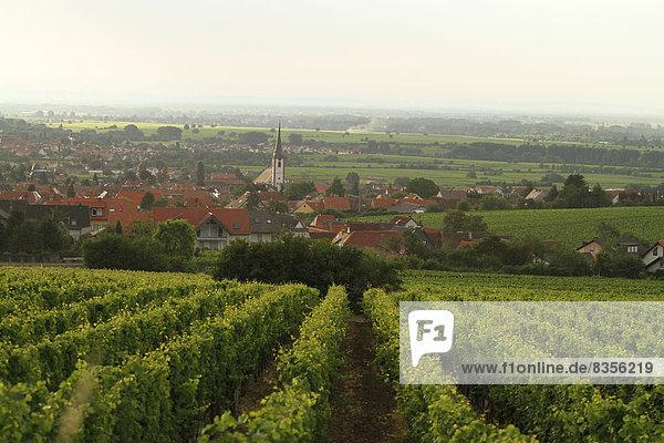 Das Dorf Maikammer  vorne ein Weinberg  Maikammer  Rheinland-Pfalz  Deutschland