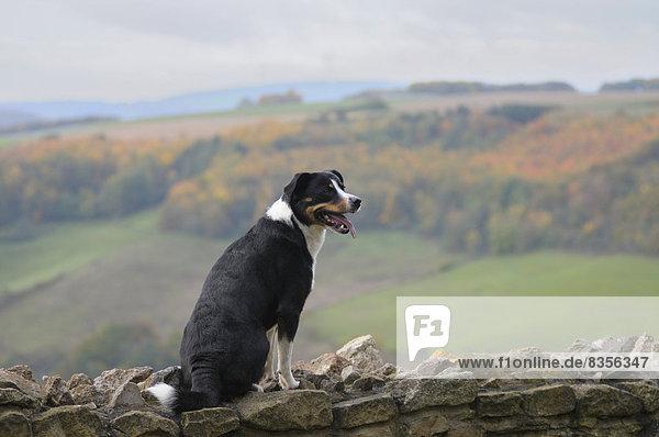 sitzend  Berg  Landschaft  Stein  Wand  Hund  Deutschland